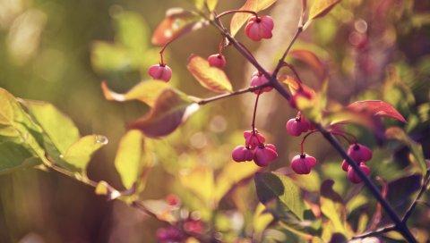 Ветви, листья, ягоды, цветы
