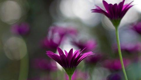 Цветы, пар, блики, трава, стебель, почка
