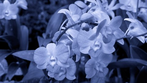 Цветы, вечер, свет, малый, форма