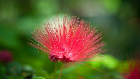 Цветок, красивая трава, необычный