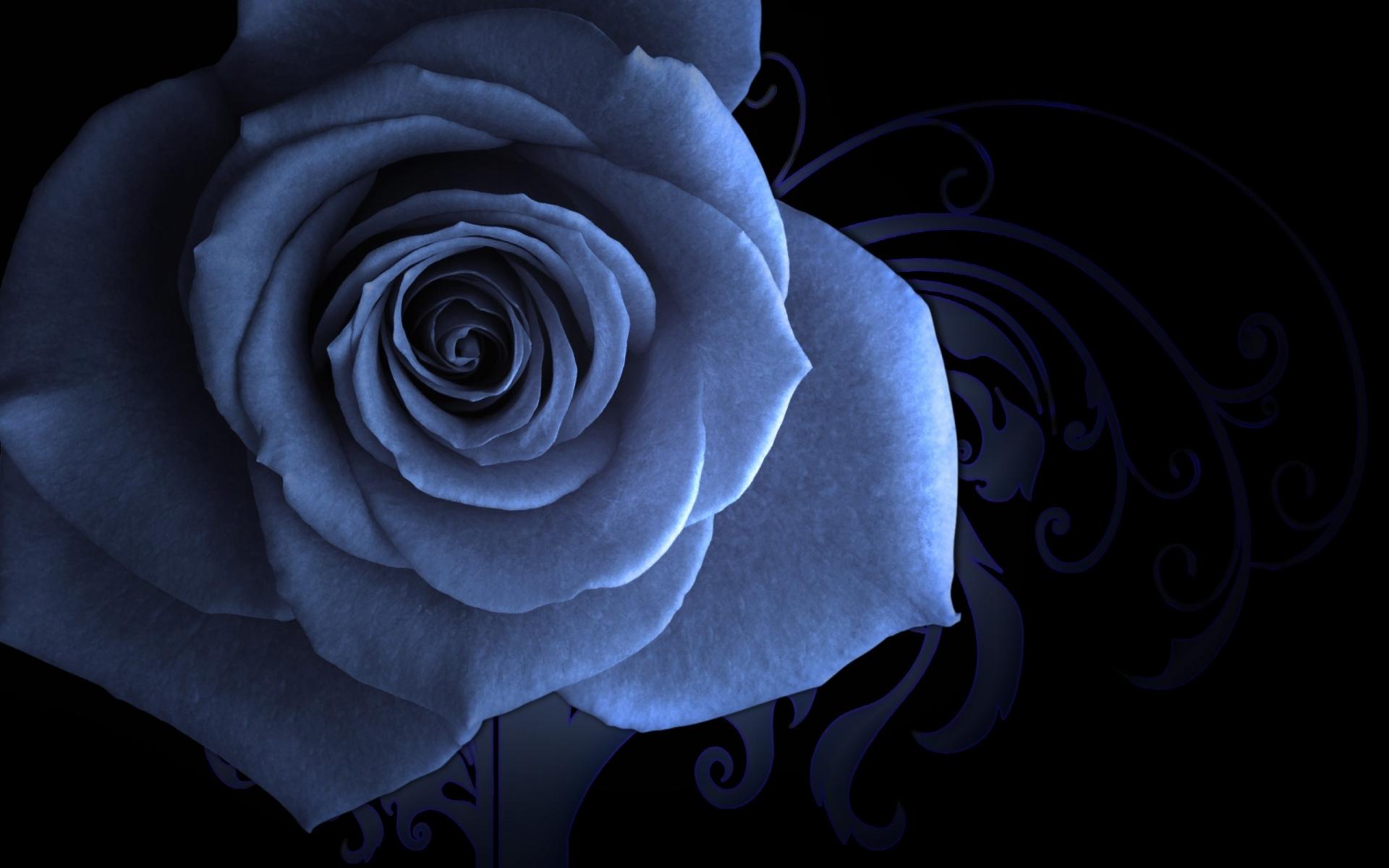 Картинки Роза, цветок, лепестки, узоры, фоны фото и обои на рабочий стол