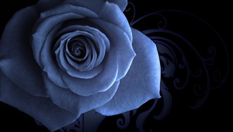 Роза, цветок, лепестки, узоры, фоны