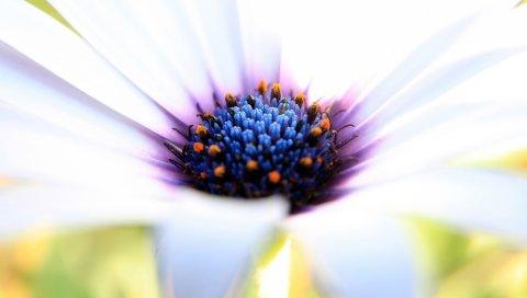 Цветок, лепестки, пыльца, креатив, краска