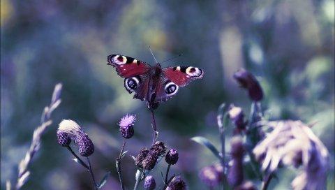 Бабочка, листья, свет, блики, трава