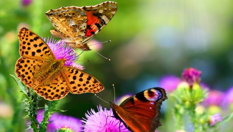 Бабочки, полет, разноцветные, красочные