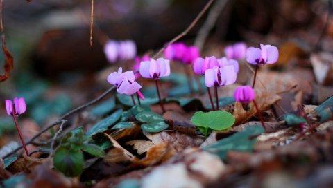 Цветы, ветки, листья, весна, мокрый