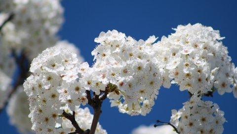 Цветы, цветение, дерево, ветка, небо, весна
