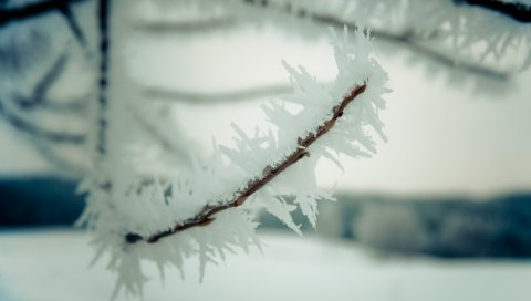 Ветка, снег, небо, зима