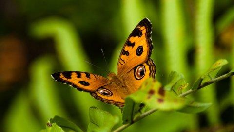 Бабочка, полет, узоры, трава, листья, растение