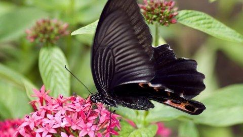 Бабочка, цветок, трава, крылья, узоры, темные