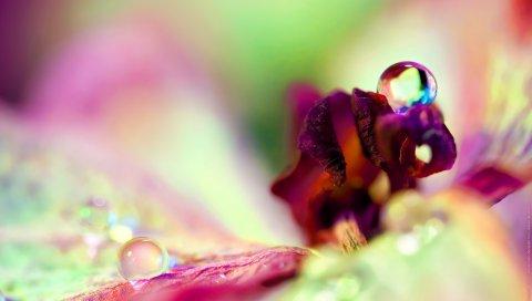 Цветок, капля, роса, лепестки, отражение, блики