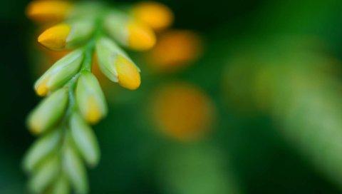 Трава, форма, блики, свет, цветок