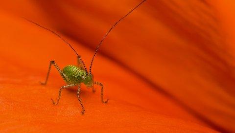 Паук, насекомое, поверхность, лист, маленький