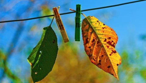 Листья, висит, веревка, небо, осень