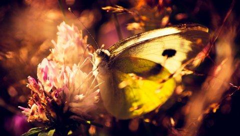 Бабочка, цветок, тень, трава, свет