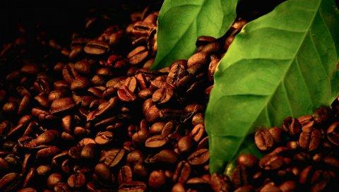 Кофе, зерно, листья, тень