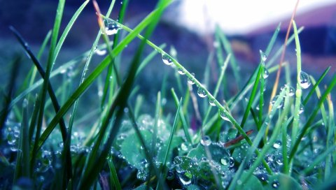 Трава, утро, роса, капли, свет