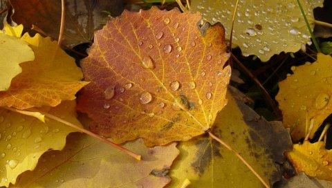 Листья, капли, роса, падение, упавшие
