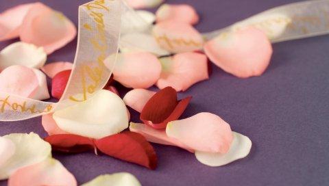 Лепестки, лента, роза, разноцветные, нежные