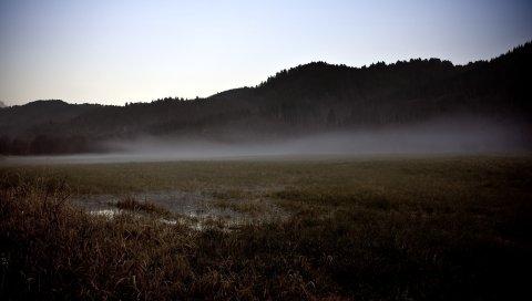 Поле, серый, болото, туман