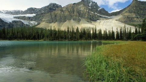 Ледниковое озеро, Альберта, Канада, горы, деревья, трава
