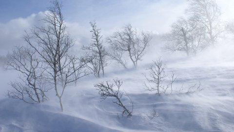 Деревья, зима, метель, ветер, снег