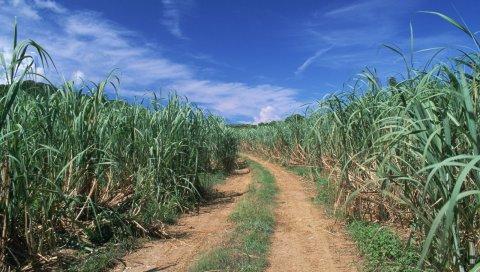 Дорога, поле, трава