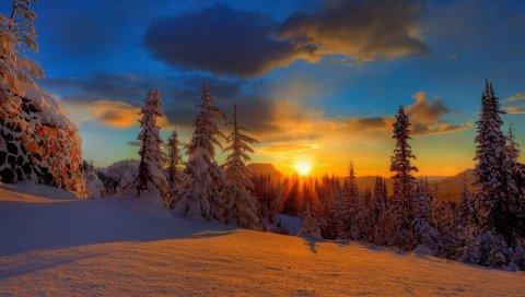 Солнце, закат, вечер, снег, деревья, елки, тень