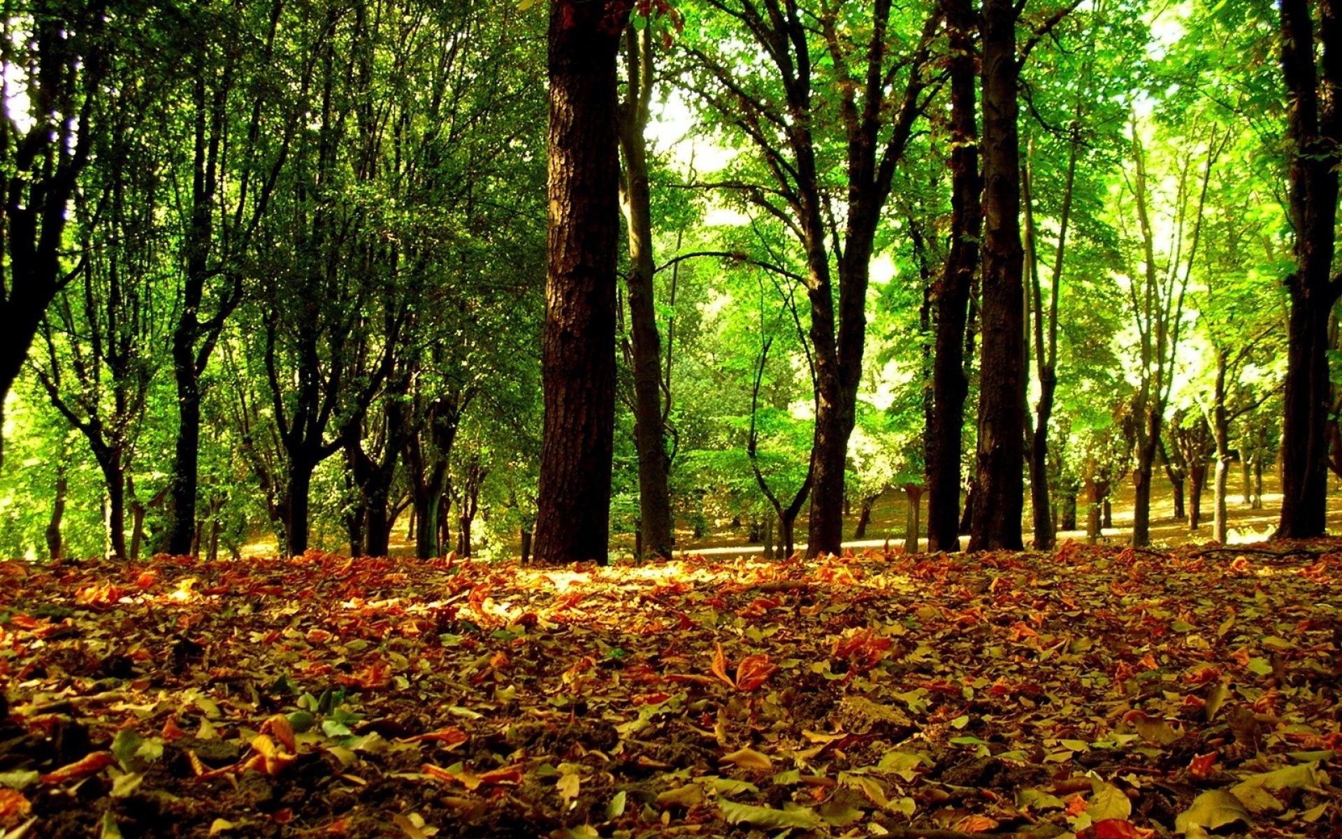 Картинки Деревья, лес, листья, кроны фото и обои на рабочий стол