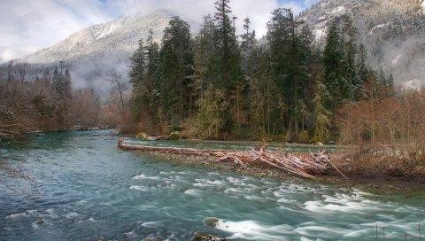 Деревья, река, елки, туман, горы