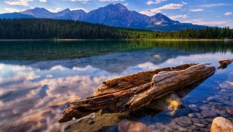 Дерево, туловище, фрагменты, озеро, гладкая поверхность воды, отражение