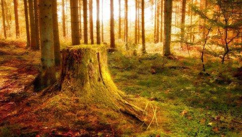 Дерево, заглушка, свет, деревья, растительность