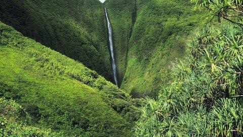 Джунгли, водопады, зелень, деревья, растительность