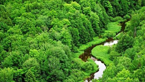 Деревья, река, зелень, изгибы, лес