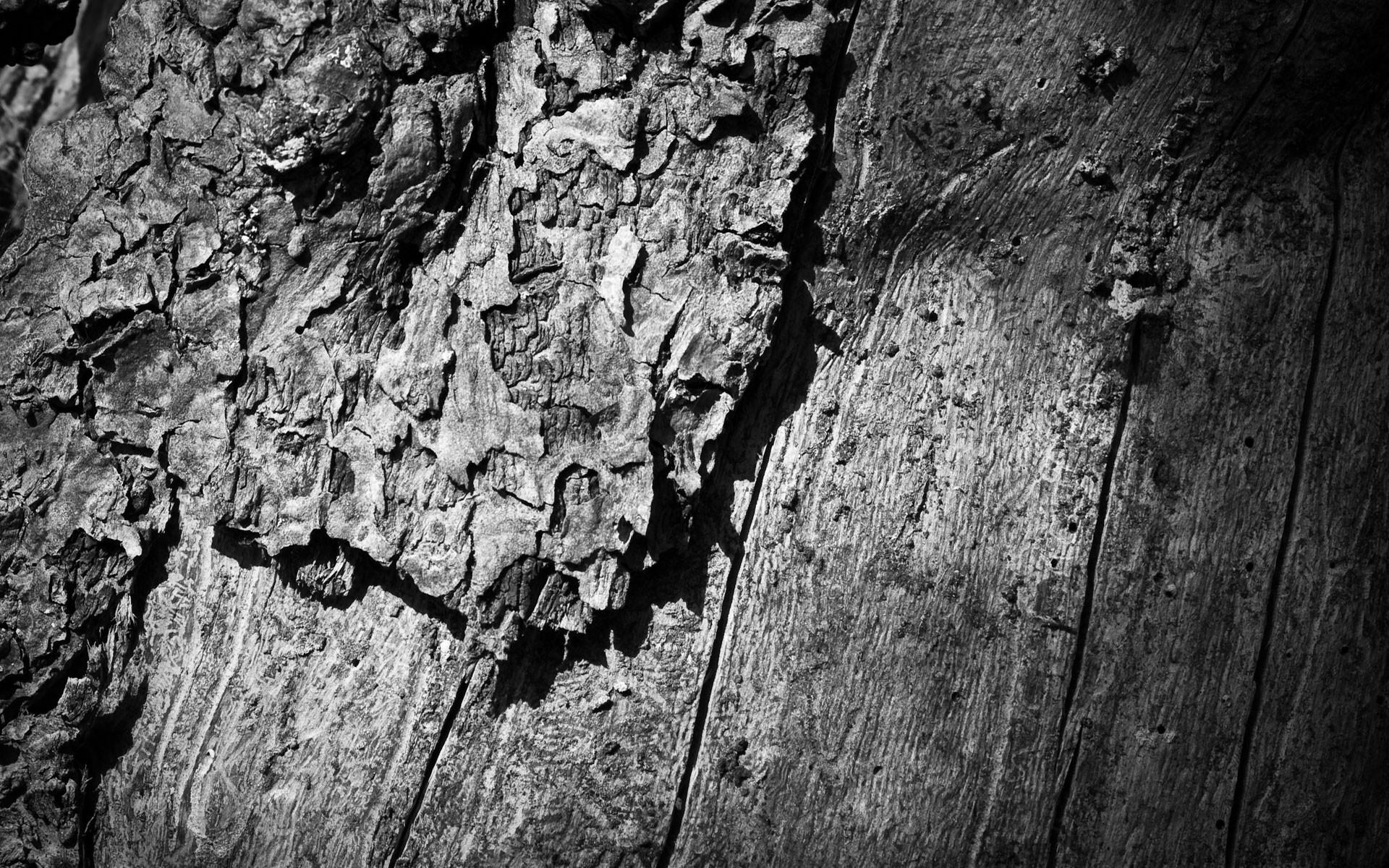 Картинки Дерево, дерево, туловище, поверхность, черный белый фото и обои на рабочий стол