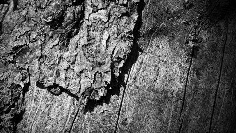 Дерево, дерево, туловище, поверхность, черный белый