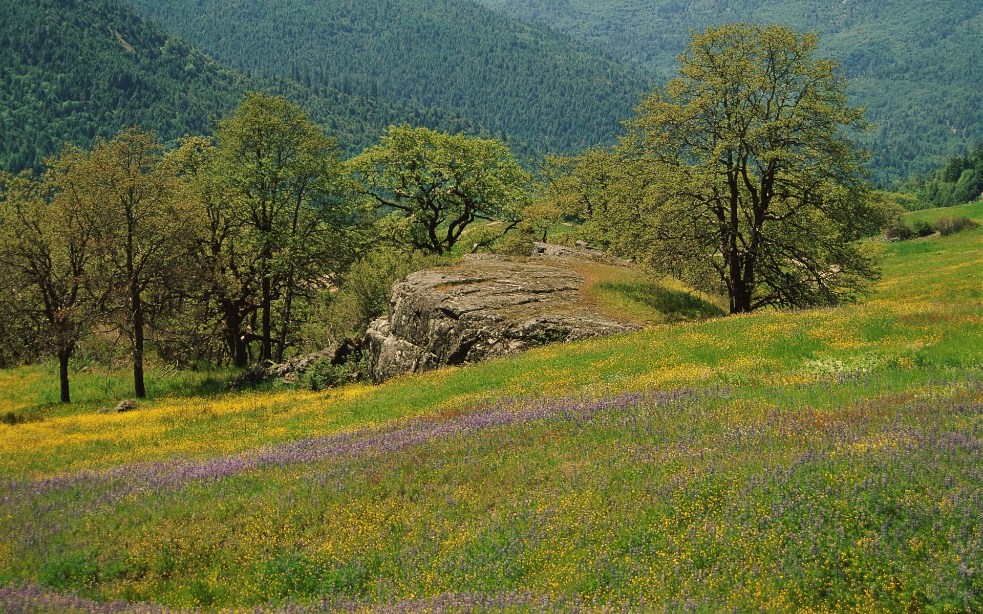 Картинки Поляна, деревья, трава, зелень, цветы, поле, горы фото и обои на рабочий стол