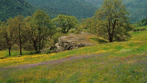 Поляна, деревья, трава, зелень, цветы, поле, горы