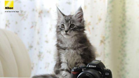 Nikon, камера, кошка