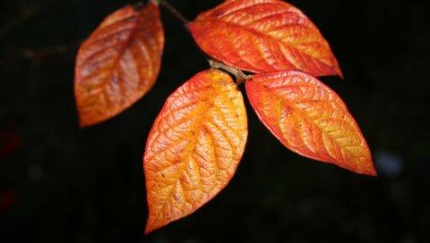 Листья, оранжевый, форма, осень