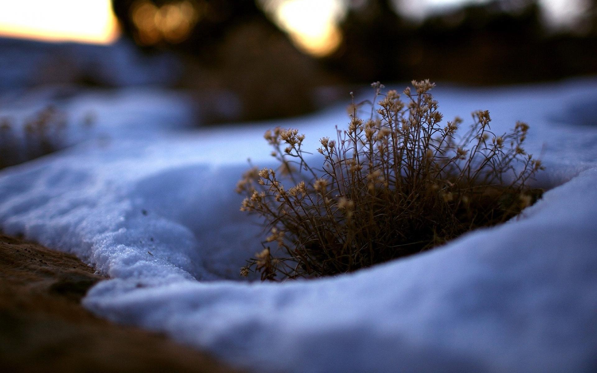 Картинки снежное утро весной