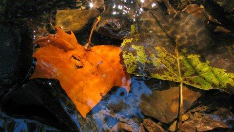Листья, падают, падают, желтые, лужа, влага