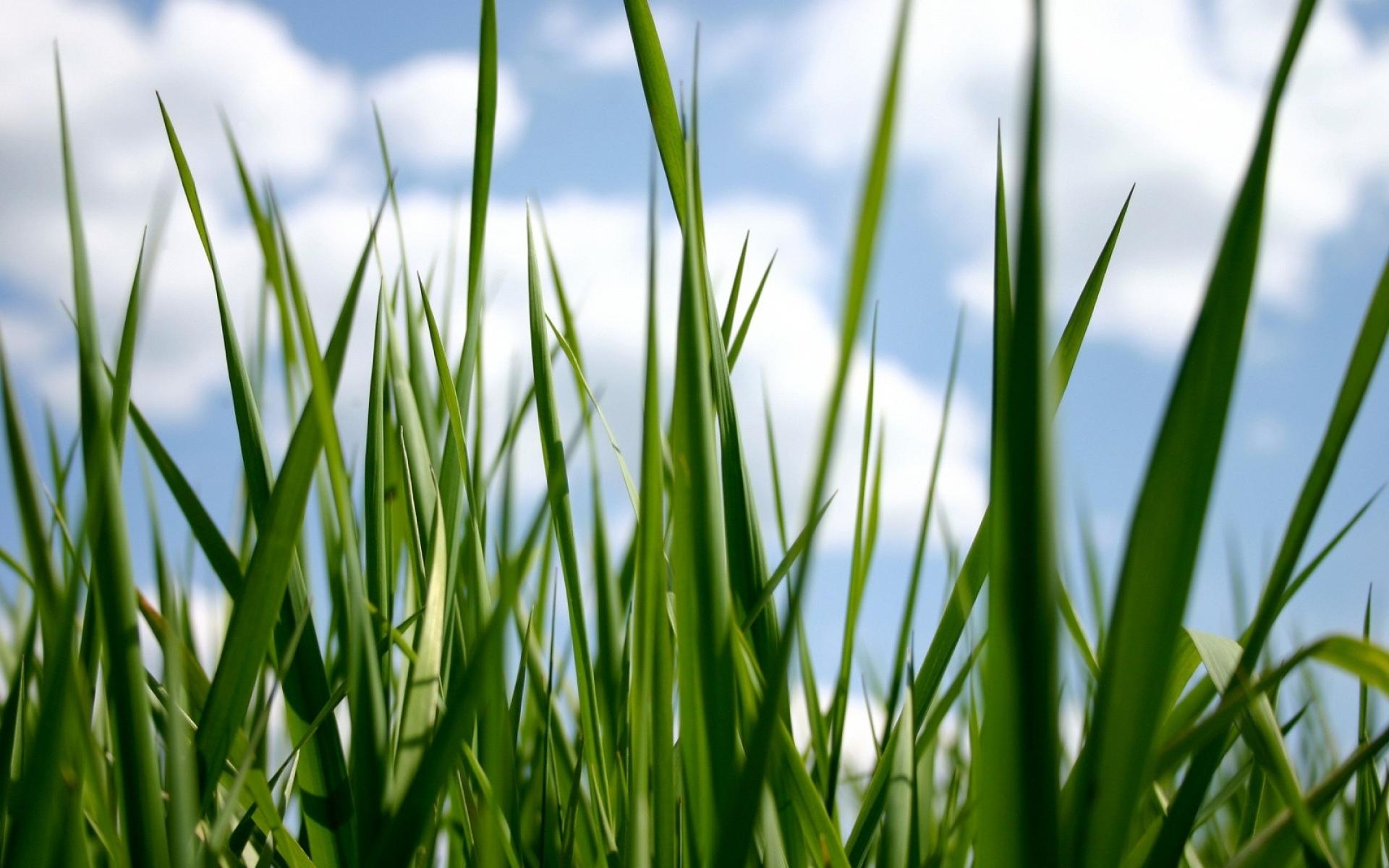 Картинки Трава, пряный, зеленый, небо фото и обои на рабочий стол