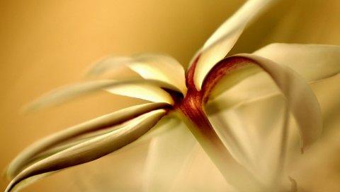 Цветы, белый, форма, свет, лепестки