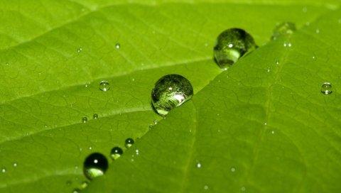 Листья, зеленый, капли, роса