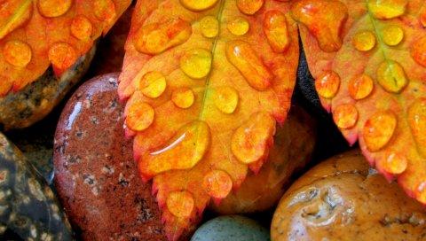 Листья, камни, влага, капли, роса, осень