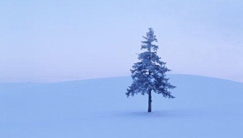 Елка, дерево, поле, снег, зима, иней