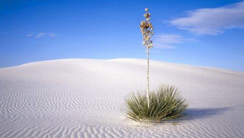 Пустыня, растение, колючки, стебель, песок, линии