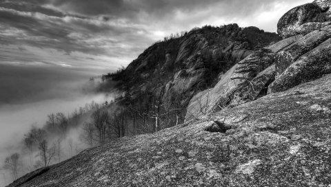 Горы, скалы, деревья, туман, черно-белые