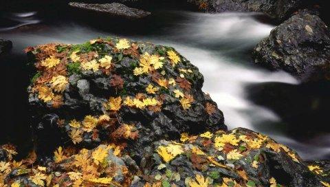 Листья, осень, река, камни, мох